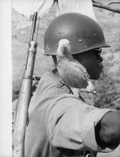 A Congo soldier with a bird on his shoulder, 1960,