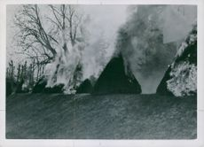 Trees and bushes in Skaugum burnt by the Germans, Norway 1941.