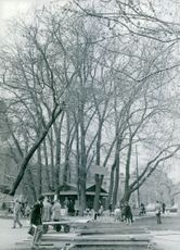 People gathered under bare trees.