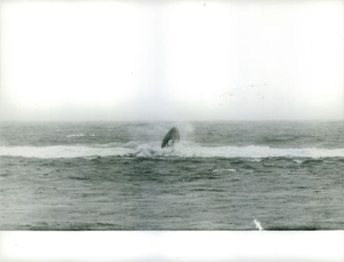 Alain Bombard sailing across the ocean and capturing a whale on his camera.