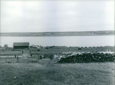 Stack of woods at river side during Finnish war.