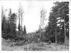Forest damage to the trees that the aircraft plowed into at an air crash