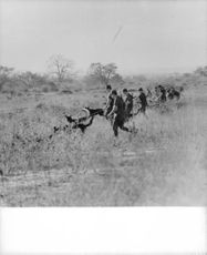 Soldiers running together with their dog in the field of Africa.