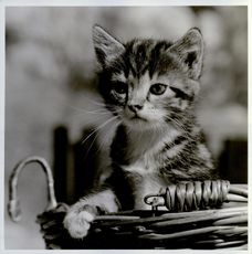 A photographed of a kitten in a basket.
