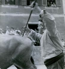 An old man wearing beret was about to struck an ox from behind.