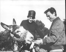 Swiss actor Michel Simon feeding a horse