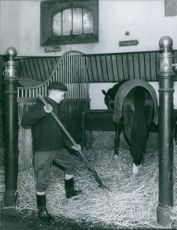 A young boy cleaning a horse stable.