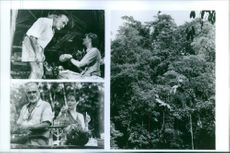 1992 Three scenes of Sean Connery and  Lorraine Bracco from the film Medicine Man.
