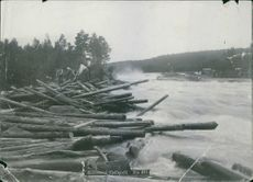 RAFTING of Forest timber carried by flood in the river.