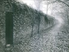 A wall in the forest and fall leaves on ground.