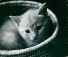 A pussycat in the basket.
