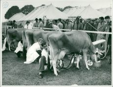 Dairyman at Royal Norfolk Show