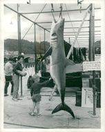 Shark Fish and a child.