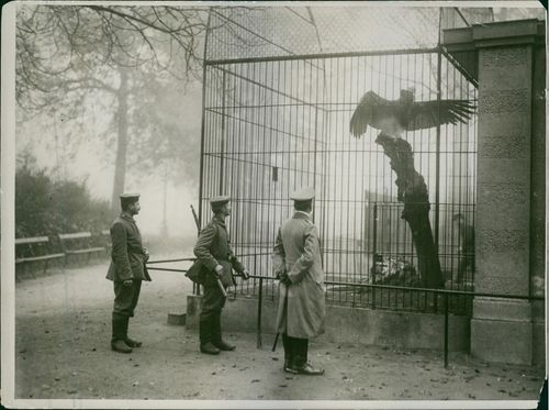 Soldiers standing looking at eagle, in cage.