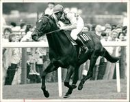 Ten no trumps, shown here ridden by the Princess Royal.