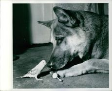 A dog and  love birds being photographed together.