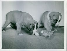 Two puppies playing with a ball and a bird.