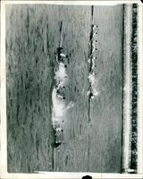The Oxford crew boat sinks.