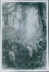 Soldiers cutting shrubs in the forest during WWI. 1902
