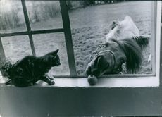 Horse trying to eat apple through window while the cat looking at it.