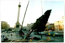 Trafalgar Square Christmas tree