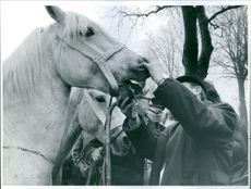 Vintage photo of a man inspecting a horse's mouth.