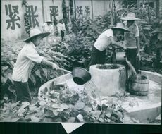 Water being poured on plants and container by people.