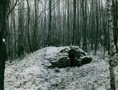 Cave in forest.1967
