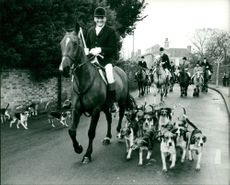 The Waveney Harriers Boxing Day Hunt