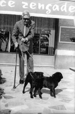 Duke of Windsor smoking cigar while taking a stroll with his two dogs.