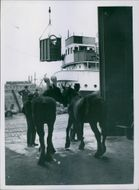 Two horses silhouetted in the doorway as one of their number is hoisted aboard the a.s. North Down, which can be seen in the background, when they were shipped to Poland, from Belfast.