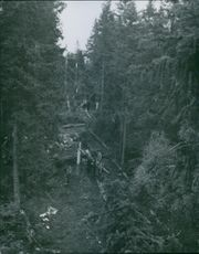 People standing in the forest during World War II in Sweden, 1944.