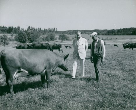 Overall usage. Disp. Carl Sundberg and Former Wedell at Överum with one of the high-quality cows of RSB race