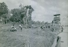 Vietnamese soldiers watch over the civilians while cutting grass beside a road in Vietnam.