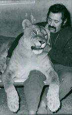 A man sitting with a lioness.