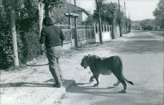 A man walking with leopard.