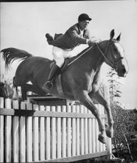 Equestrian Competitions in Stockholm, S.Erwall on Sessan