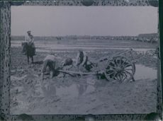 World War I 1914-18 Soldiers patrolling in the field while the farmers trying to get the horse up.