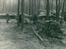 People in forest, standing and communicating with each other.