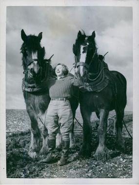 A woman holding a two horses in Sparsholt, Hampshire. 1942