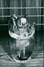 A parrot inside the glass of water.