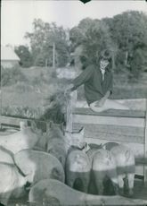Woman sitting and looking at the group of pigs. 1956