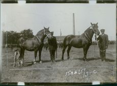 Men standing with horse in the farm.