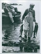 John McDowall, right, wades ashore with his catch of salmon. September 16, 1964.