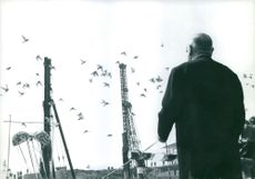 Man looking at a flock of birds, flying over a construction site.