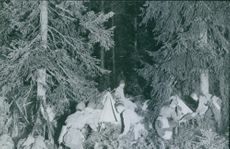 Soldiers making tent inside the forest during First World War, 1940.