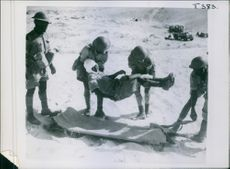 1942 Fighting French in Desert Warfare A fighting French casualty have been given fist aid, as placed on the stretcher for transport to the ambulance.
