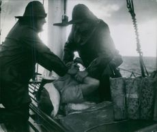 Life-saving attempt on board the Lifeboat.