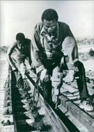 Zambian workers at work on their section of the Tan-Zam Railway, which will link Dar-es-Salaam with the Zambian copper fields.Hitherto the work has been carried out mainly by chinese technicians, and in the words of the official caption released by the Ch