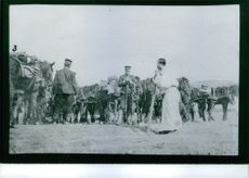 Soldiers standing with their mules.